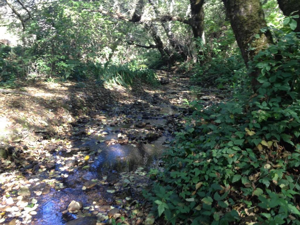 Liddell Creek
